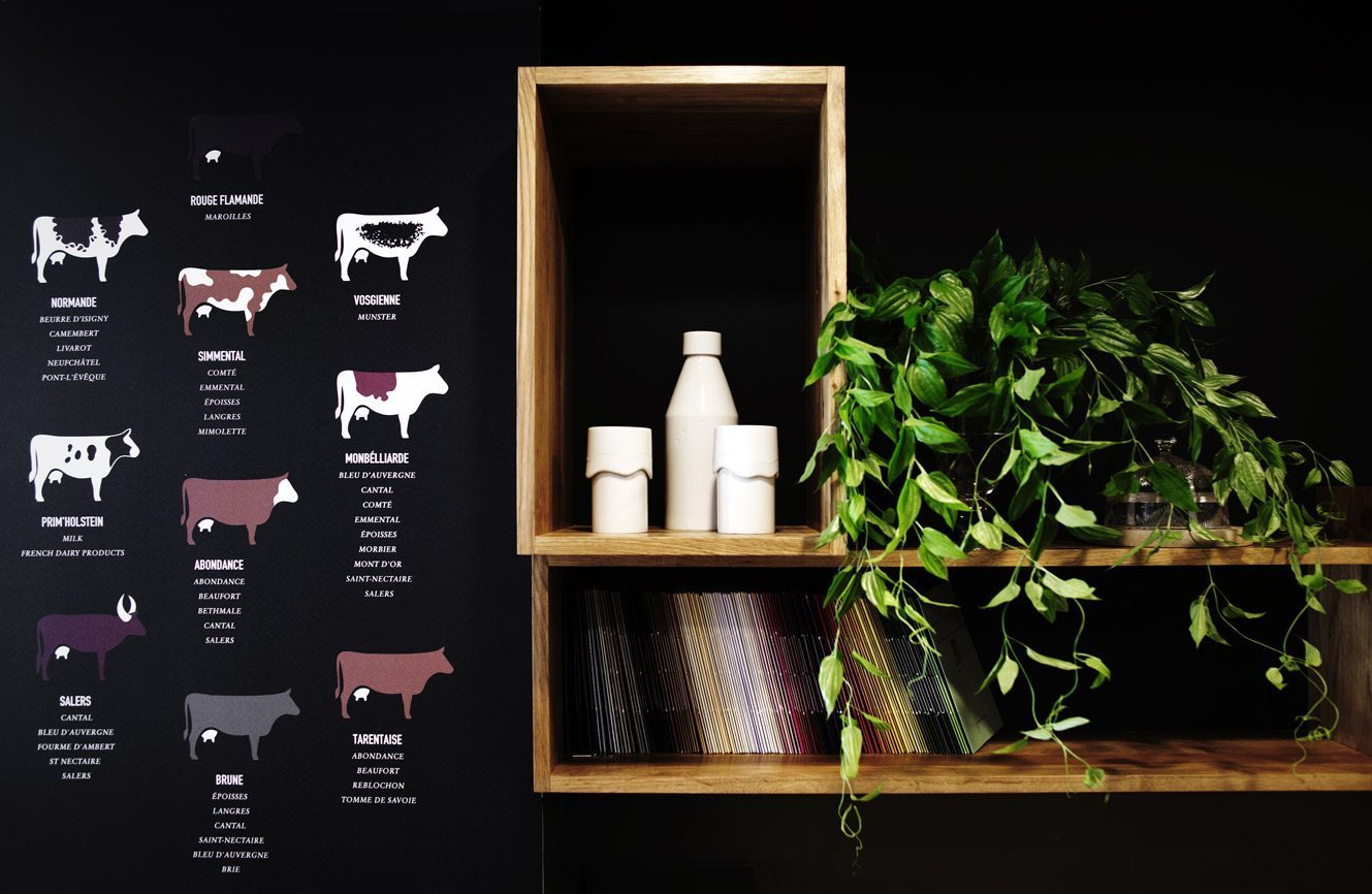 cow breeds illustration by ichetkar photo by Pascal Perich