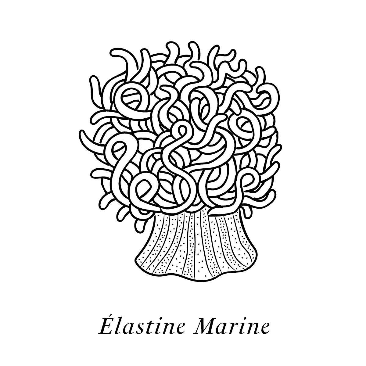 Illustration de l'élastine marine, un des actifs naturelle du soin haute couture Claudius N°1
