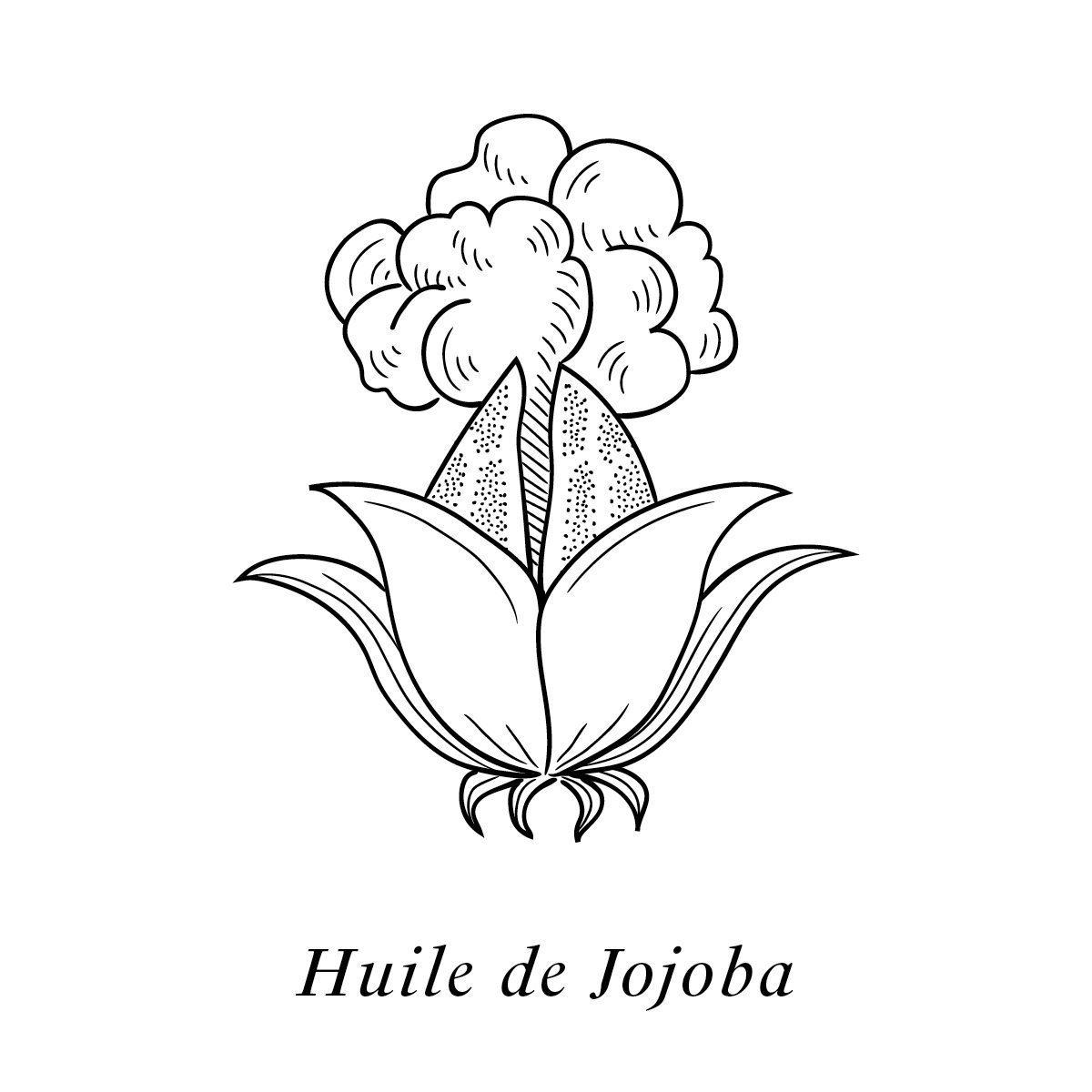 Illustration de l'huile de Jojoba, un des 19 actifs de la crème Claudius N°1, design ichetkar