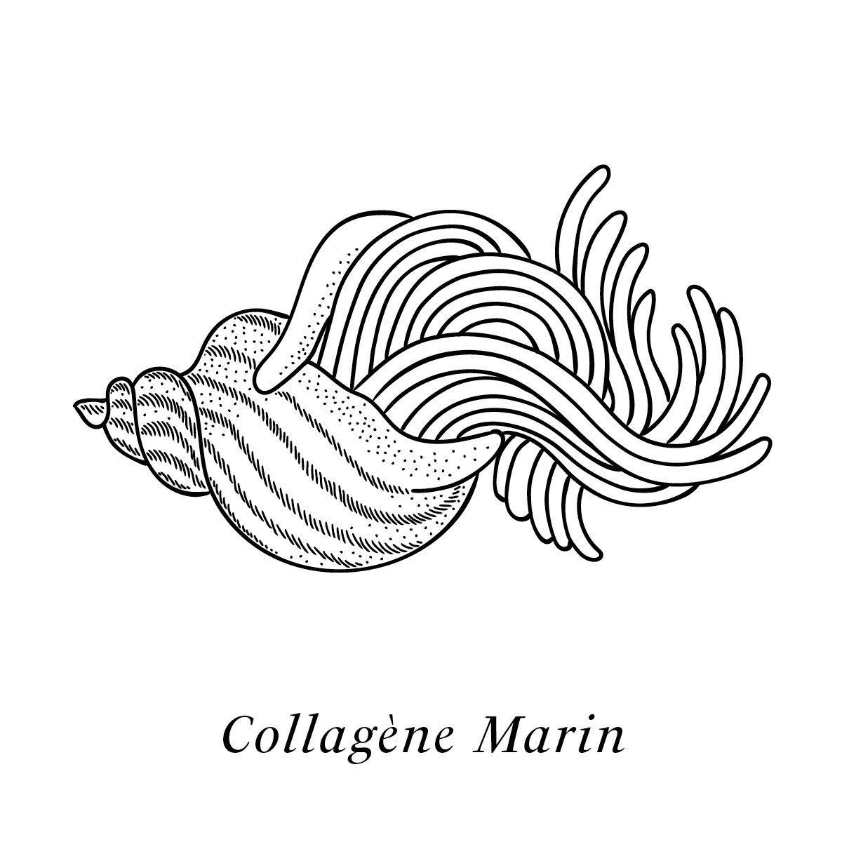 Illustration du collagène marin, actif de la crème Claudius N°1 agissant sur le vieillissement de la peau, design ichetkar
