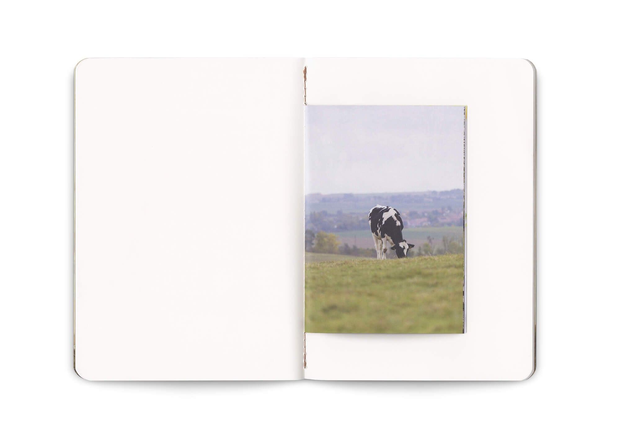 double page du carnet think milk, avec une photographie de vache laitière. composé par Ich&Kar