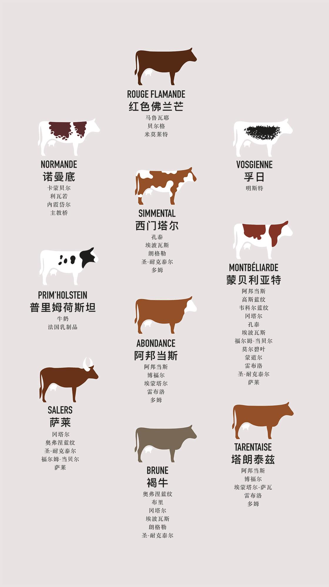 Illustrations pédagogiques des vaches laitières française, design et dessin par IchetKar