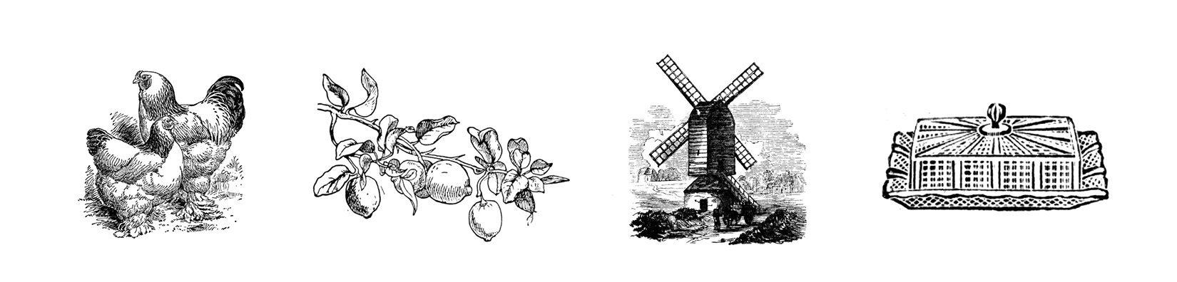 collections de gravures anciennes, pour illustrer les supports de communication de la start-up bio et locale, la madeleine volante