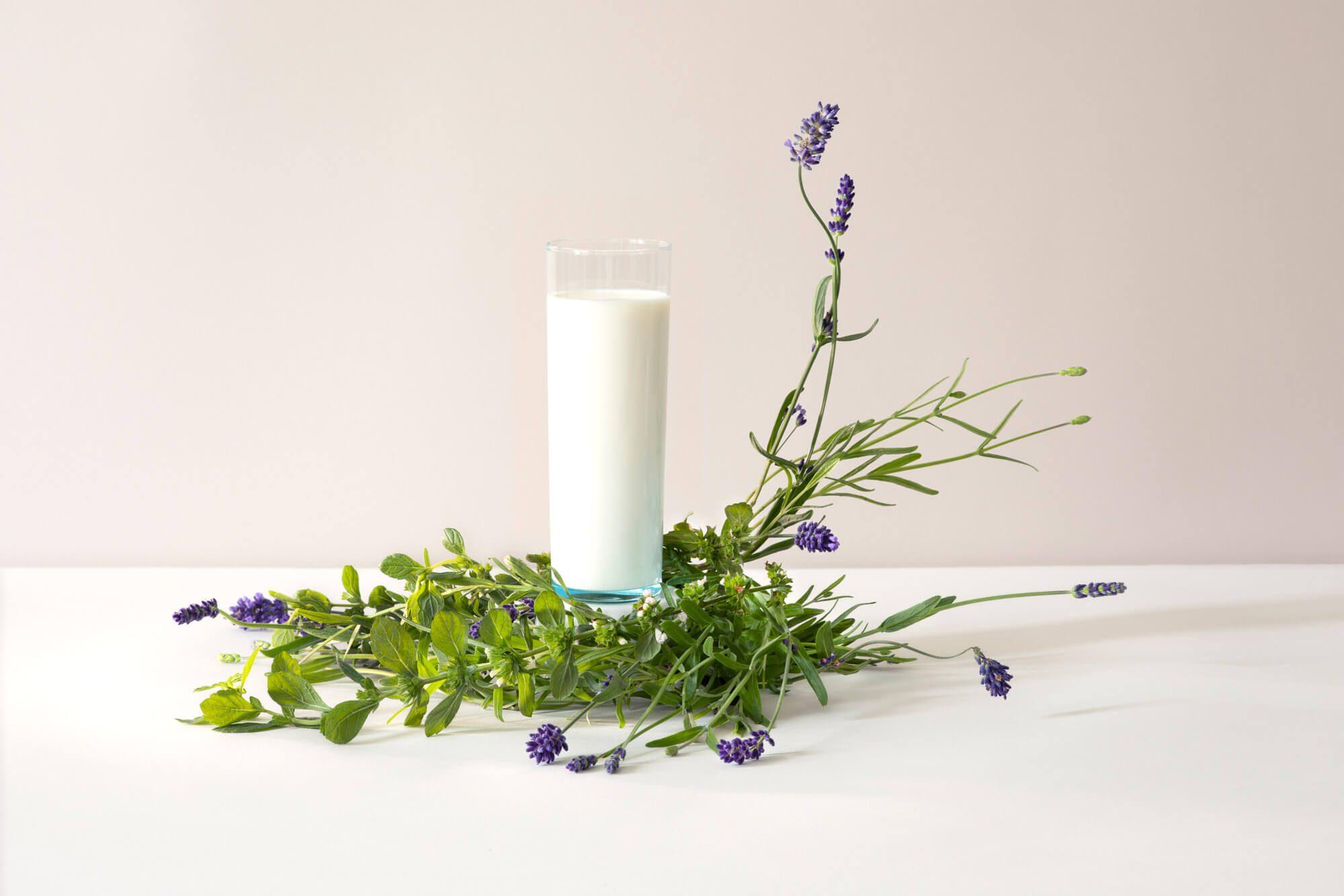 un verre de lait et des plantes, lavande, mélisse, photographie en studio par la photographe Virginie Perocheau pour la série des laits infusés, sous la direction artistique de Ich&Kar